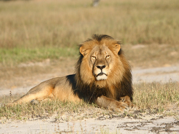 "And if you're not outraged by Cecil being killed, that doesn't make you a bad person either. While I was talking about this story, my wife said, ""I think my 'carer' is full…."" Some people don't have the capacity to care about another thing. And that's okay too."