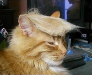 This cat is lees of a joke than Donald Trump. I'm completely honest when I say I would vote for